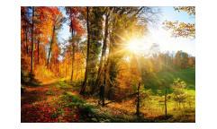 Vliesová fototapeta Procházka lesem 0065