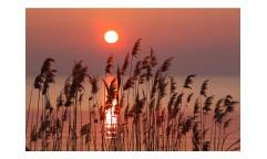 Vliesová fototapeta Rákos na jezeře 0089