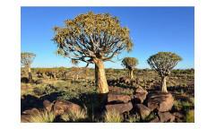 Vliesová fototapeta Namibie 0103