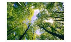 Vliesová fototapeta Stromy v oblacích 0104