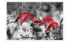 Vliesová fototapeta Červené listí na černém pozadí 0110