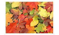 Vliesová fototapeta Pestrobarevné listí 0115