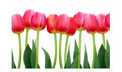 Vliesová fototapeta Tulipány 0126