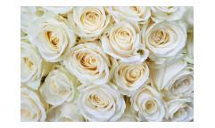 Vliesová fototapeta Bílé růže 0137