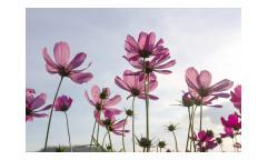 Vliesová fototapeta Květiny 0145