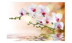 Vliesová fototapeta Bílá Orchidej 0147