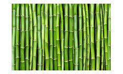Vliesová fototapeta Bambus 0165