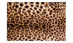 Vliesová fototapeta Leopardí kůže 0184