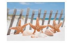 Vliesová fototapeta Hvězdice na pláži 0206