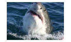 Vliesová fototapeta Žralok 0217