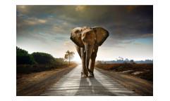 Vliesová fototapeta Kráčející slon 0225