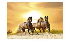 Vliesová fototapeta Koně při západu slunce 0227