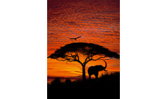 Fototapeta African Sunset, Západ slunce 4-501