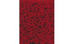 Fototapeta Roses, Růže 4-077