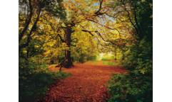 Fototapeta Autumn Forest, Podzimní les 8-068