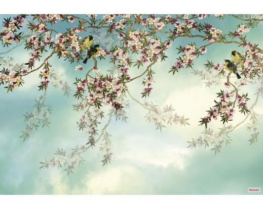 Fototapeta Sakura 8-213