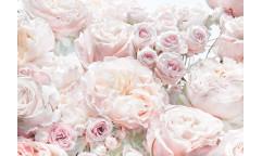 Fototapeta Spring Roses, Růže 8-976
