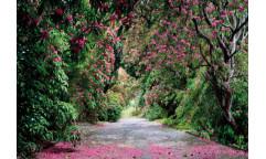 Fototapeta Wicklow Park, Růžové květy 8-985