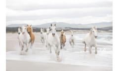 Fototapeta White Horses, Bílí koně 8-986