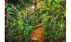 Fototapeta Jungle Trail, Stezka v džungli 8-989