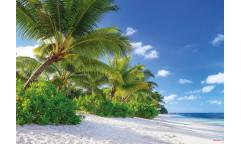 Fototapeta Reunion, Pláž 8-992