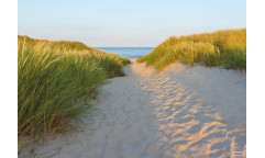 Fototapeta Sandy Path, Cesta k moři 8-995