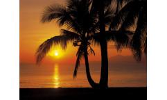 Fototapeta Palmy Beach Sunrise, Pláž a východ slunce 8-255