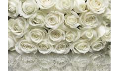 Fototapeta A La Rose, Růže 8-314