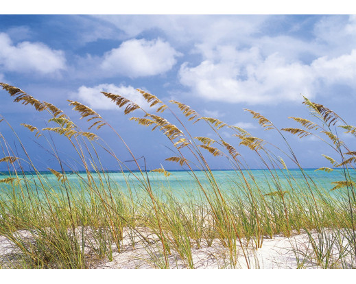 Fototapeta Ocean Breeze, Moře 8-515