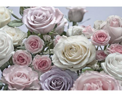 Fototapeta Floraison, Růže 8-736