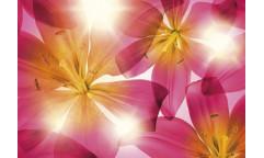 Fototapeta Summer Sun, Růžová květina 8-928