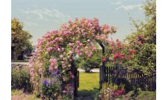 Fototapeta Rose Garden, Růžová zahrada 8-936