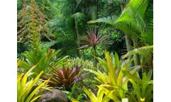 Fototapeta Džungle FTN 2490