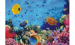 Fototapeta Korálový útes FTN 0375