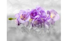 Fototapeta Květ FTN 2400
