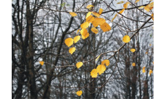 Fototapeta Podzimní listí FTN 0317