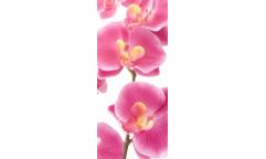Fototapeta Orchidea FT 0027, FTN 2826