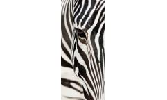 Fototapeta Zebra FT 0211, FTN 2853