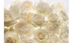 Fototapeta Shalimar, Bílé růže XXL4-007