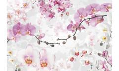 Fototapeta Allure, Orchidej XXL4-032