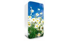 Samolepicí fototapeta na lednici Daisies, Kopretiny