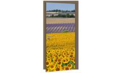 Samolepicí fototapeta na dveře Sunflowers DL007 Slunečnice