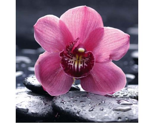 Samolepicí fototapeta na podlahu Orchid, Růžová orchidea