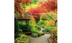 Samolepicí fototapeta na podlahu Japanese garden,  Japonská zahrada