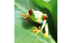 Samolepicí fototapeta na podlahu Frog, Žába