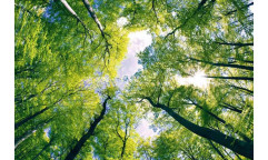 Samolepicí fototapeta na podlahu Trees, Stromy