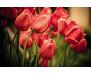 Samolepicí fototapeta na podlahu Red Tulips, Červené tulipány