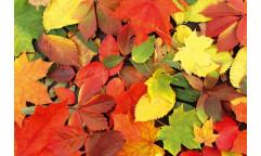 Samolepicí fototapeta na podlahu Colourful Leaves, Barevné listy