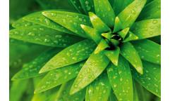 Samolepicí fototapeta na podlahu Fresh foliage, Zelená rostlina