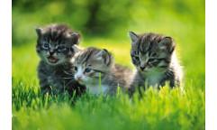 Samolepicí fototapeta na podlahu Kittens, Koťata